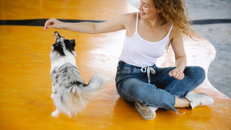 cheerful woman training sheltie dog in gym